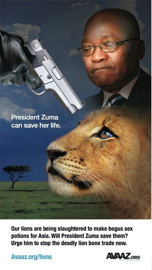 Nearly 700,000 of us are calling on President Zuma to stop the lion slaughter in South Africa: www.avaaz.org/lions And we're increasing the pressure now by placing this hard-hitting ad in Johannesburg Airport's International Arrival Hall and South African Airways' inflight magazine. Let's amplify our call on the South African government to ban the trade of lion bones for fake Asian 'medicines'. Share this ad now and sign the petition here: www.avaaz.org/lions