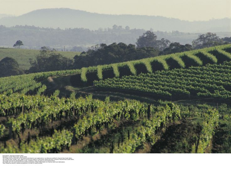 Tour the Hunter Valley, stopping at #TowerLodge for dinner at Robert's Restaurant and stay in the beautiful estate.