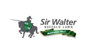 Sir Walter Buffalo Turf