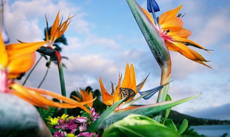The Beautiful Flowers Of Hawaii
