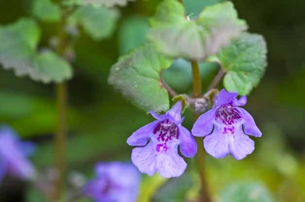 Not sure how to tell the good from the bad when identifying weeds in your garden? We'll help you figure out whether you should pull it up or let it grow.