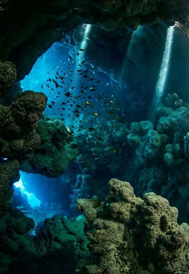 Underwater cavern; reminds my of my abstract underwater cavern. the colors and position of coral and rocks.