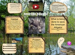 The American alligator, sometimes referred to colloquially as a gator or common alligator, is a large crocodilian reptile endemic to the southeastern United States. #glogster #glogpedia #americanaligator