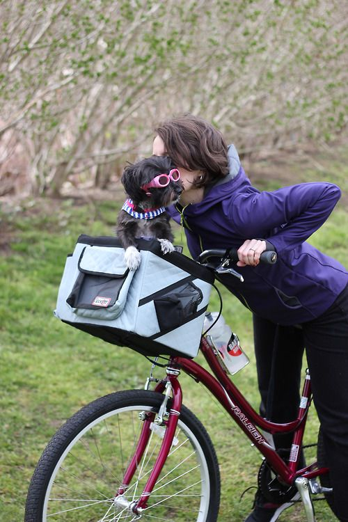154 best images about Dog Carriers for Bikes on Pinterest ...