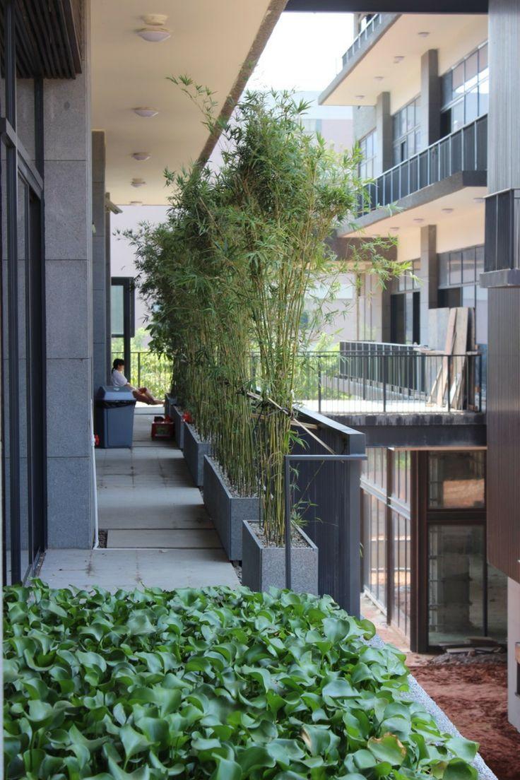 Bambus Als Balkon Sichtschutz Pflanzkuebel Idee Modern Gestaltung Efeu Balkon Sichtschutz Pflanzkubel Bambus Balkon
