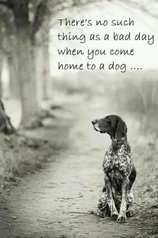 So true!! | hunting dogs | Dogs, German shorthaired ...