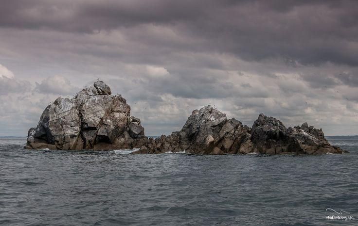 [BLOG] **Nouvel article**  Madame Voyage nous fait le plaisir de partager, au travers de cet article, son expérience au sein de la Réserve Naturelle de l'archipel des 7 îles en Bretagne.  Si vous aussi vous souhaitez découvrir son témoignage, c'est par ici https://www.nosyvoyages.com/2017/07/27/i-bretagne-i-la-reserve-naturelle-de-larchipel-des-7-iles-a-bord-dune-goelette/