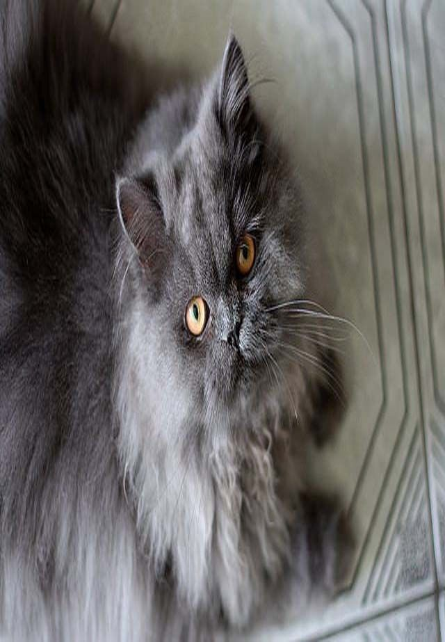 9596610b9d3bee41358fb0826e0a5c71 - How To Get Knots Out Of A Long Haired Cat