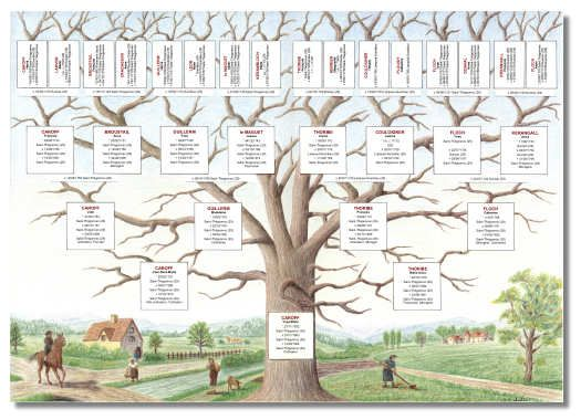 Arbre généalogique : l'esprit de famille - Le blog de Clairedelune