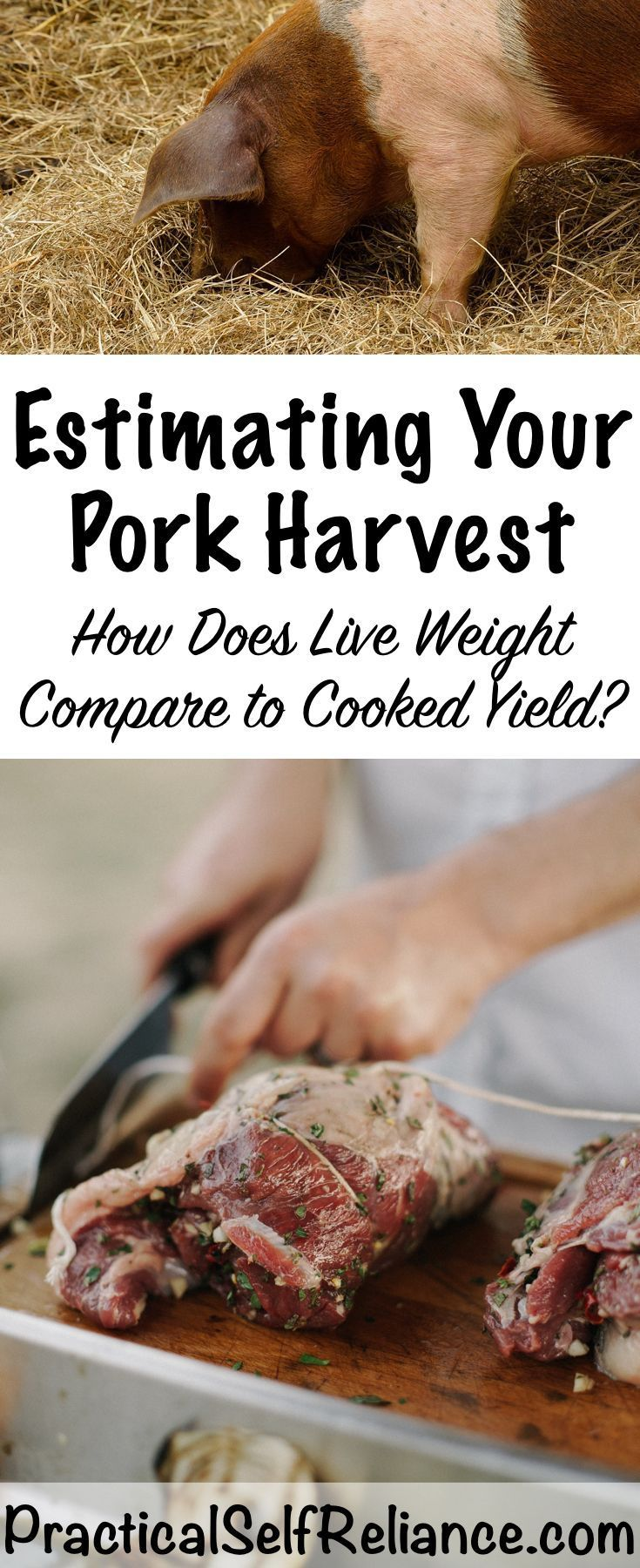 Estimating Your Pork Harvest: How Does Live Weight Compare to Cooked Yield?