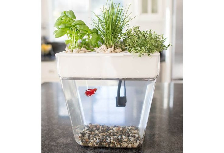 Best 25 fish tank stand ideas on pinterest tank stand for Best way to clean a fish tank