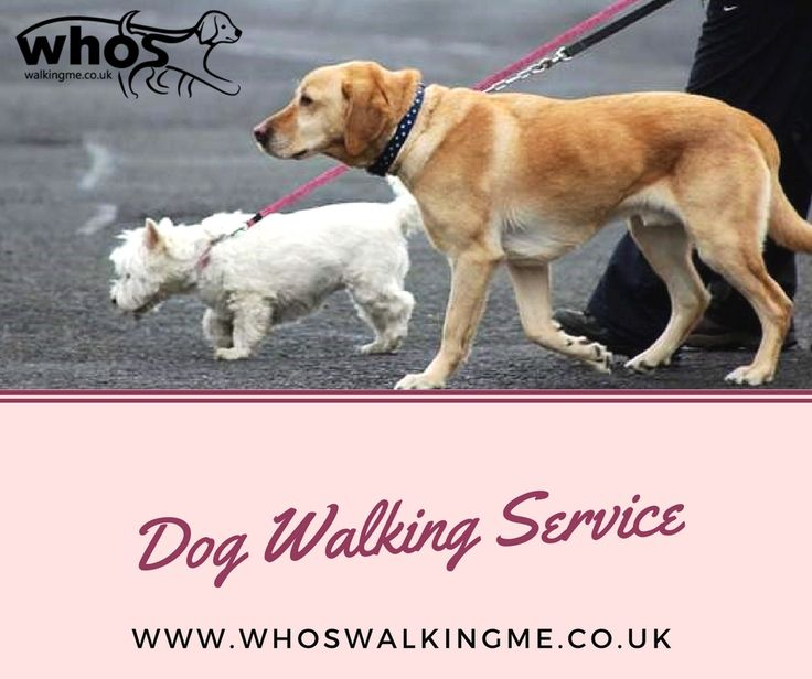 If you are finding best and professional dog walking service in your area then contact at Whos Walkingme. We provides reliable and professional dog walking service. If you want to get our service then contact at 07825 183 242  #doglovers #dogcare #PetCaretaker #puppyvisits