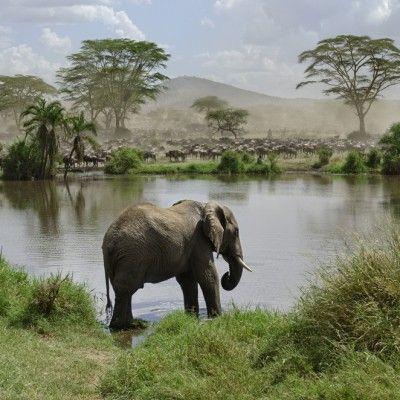 Moshi, Tanzania | Serengeti National Park