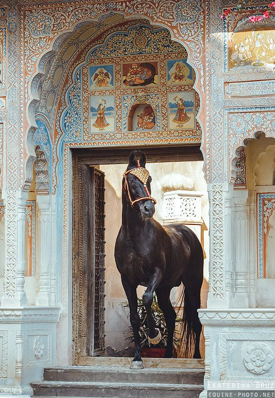A blog celebrating the classical beauty of the Horse.