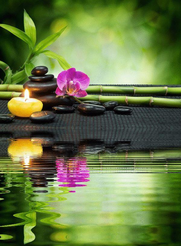 600 815 gif variados 2 pinterest psychic readings - Salon toilettage zen attitude ...