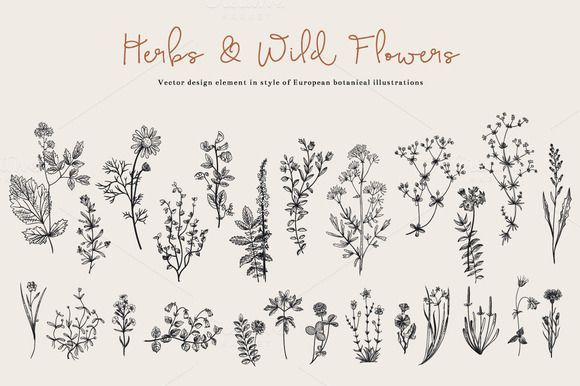 Tatto Ideas 2017 Herbs & Wild Flowers. Set