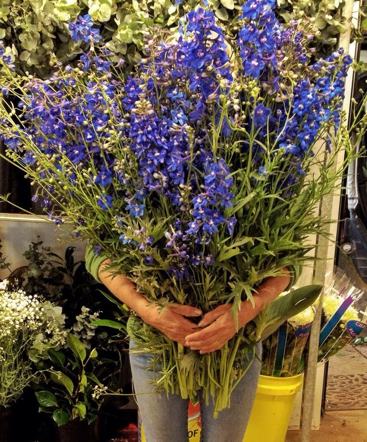 Armfuls of Blue Delphiniums at Avonlea Flowers