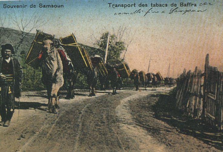 Transportation of tobacco, Baffra. Amisos, Samsun
