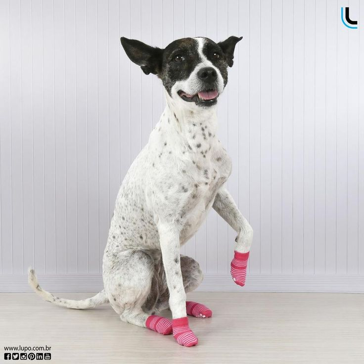13 best lulupo pet socks images on pinterest athletic dresses quem quer meias antiderrapantes lulupo levanta a pata petsocks lulupo lupolove fandeluxe Image collections