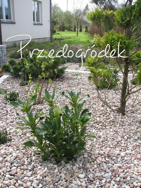 We create a foreground Ogród przydomowy, garden home, flower discount