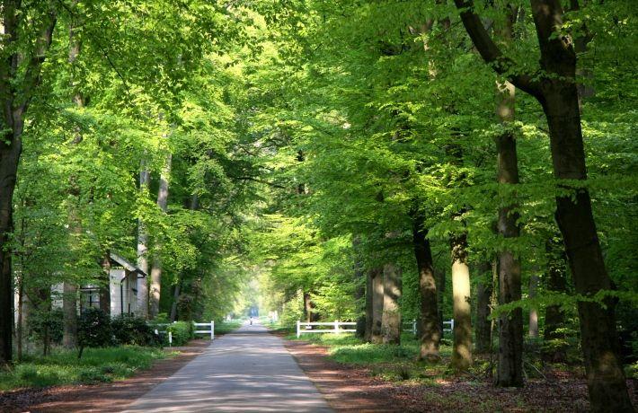 Gravenallee  De Gravenallee in Almelo is de oprijlaan van huize Almelo. Deze allee, waarlangs monumentale boerderijen met pachtgronden liggen, vormt een groene omgeving dicht bij het centrum van Almelo.  Vanuit Huize Almelo kijk je diep de Gravenallee in. Deze historische jachtlaan is 3.5 kilometer lang en eindigt bij het Kanaal Almelo-Nordhorn. In totaal heeft de Gravenallee maar liefst 16 kilometer aan wandel- en fietspaden en sprookjesachtige weggetjes.