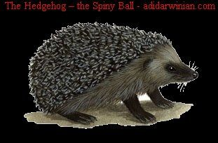 Beautifully Written Research Information on Hedgehogs http://adidarwinian.com/the-hedgehog-the-spiny-ball/   The Hedgehog – the Spiny Ball!! | adidarwinian provides a beautifully written research information on hedgehogs for animal lovers!!