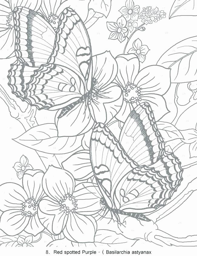 Free Printout Coloring Pages Fresh Free Printable Coloring Pages For Adults Pdf At Getdrawings In 2020 Butterfly Coloring Page Coloring Pages Coloring Books