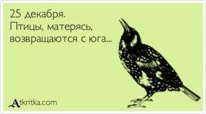 Аткрытка №384140: 25 декабря. Птицы, матерясь,  возвращаются с юга... - atkritka.com