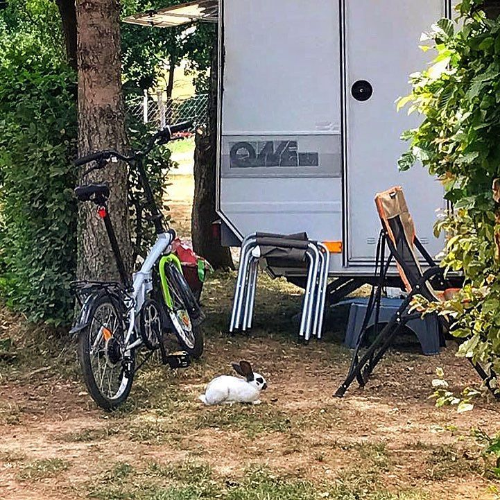 Tornati in campeggio dalla gita mattutina abbiamo trovato #martha in compagnia! #happylittlecaravan #bearcamping #bunny #roller #camping