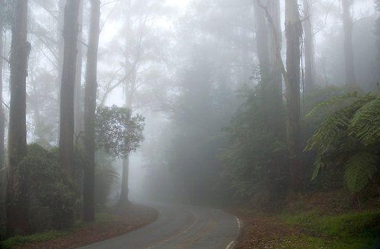 Dandenong Ranges, Mt Dandenong, Victoria