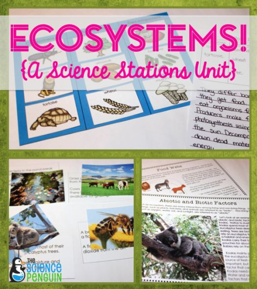 Ecosystems {a science stations unit with 9 centers about abiotic and biotic elements in an ecosystem, food chains, and food webs} $