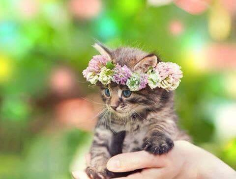 Kitten and floral crown