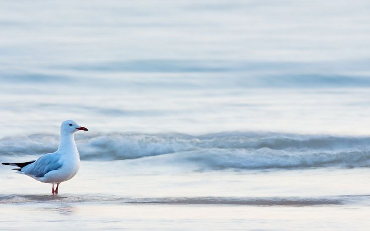 beach waves sea bird seagull