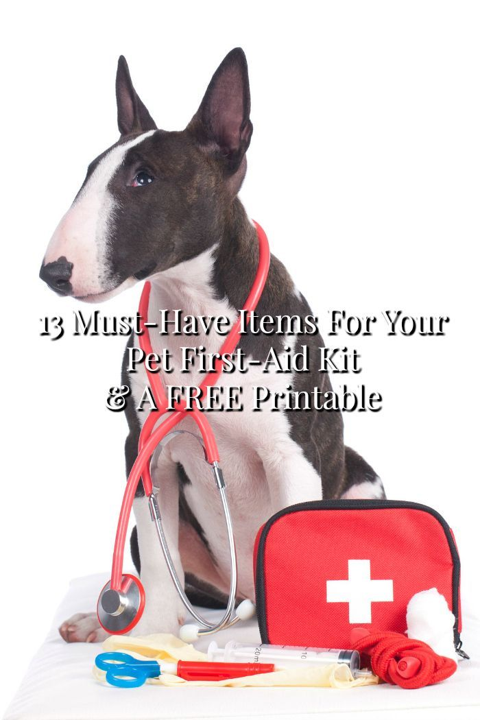 Do You Have A Pet First Aid Kit It S A Great Way To Make Sure You Re Prepared For An Emergency With Your Pet Check First Aid For Dogs Your Pet First
