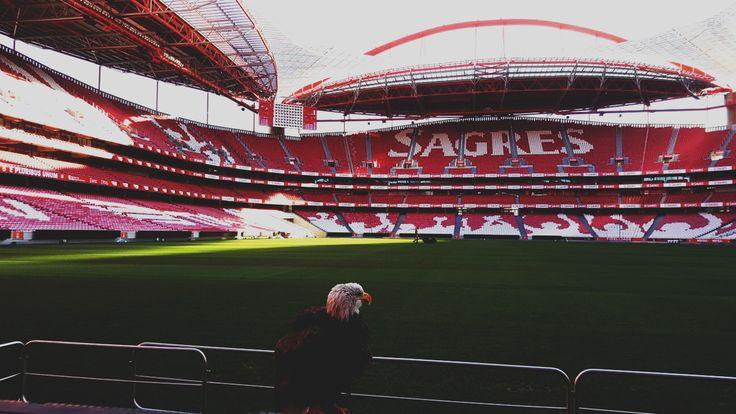 Sport Lisboa E Benfica (Visita) | Indústria Criativa