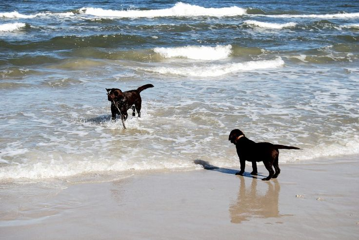 Poland, dogs on the beach