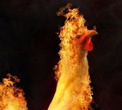 In Defense of Animals chickens on fire