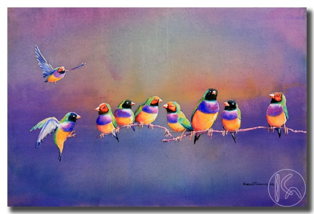 Gouldian Finches. Artist: Harold Thomas, a descendant from the Luritja Aboriginal People in the region of Central Australia