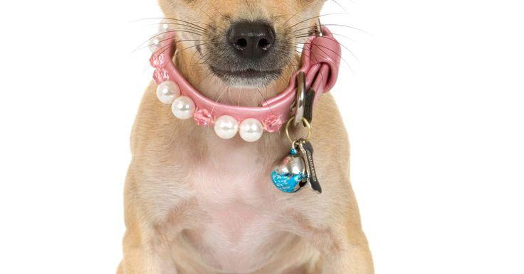Cómo poner moños en el pelo corto de un Chihuahua. Los Chihuahuas fueron muy apreciados por los toltecas del México antiguo y la raza continúa esta tradición hoy como una raza popular compañera. Muchos dueños de Chihuahuas disfrutan aseando y vistiendo a sus perros, y los moños de perros son un accesorio simple para darle a tu Chi un toque adicional. Los Chihuahuas de pelo corto son más difíciles ...