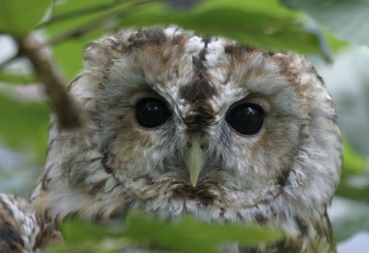 1000+ images about owls on Pinterest   Owl charms ...