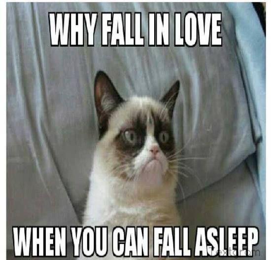 grumpy cat meme, grumpy cat quotes, grumpy cat humor ...For more hilarious pictures with quotes visit www.bestfunnyjokes4u.com/lol-best-funny-cartoon-joke-2/