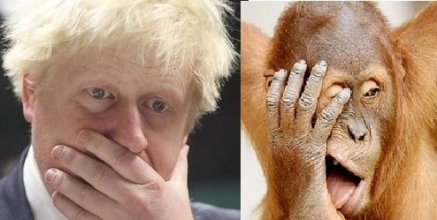 15 Orangutans That Look Like London Mayor Boris Johnson