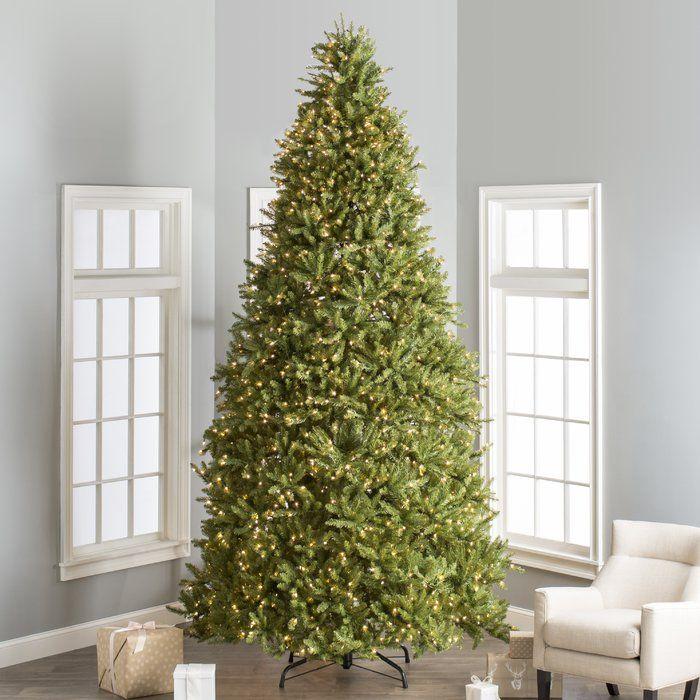 Hinged 12 Green Fir Artificial Christmas Tree With 1500 Clear Lights Fir Christmas Tree Christmas Tree Cool Christmas Trees