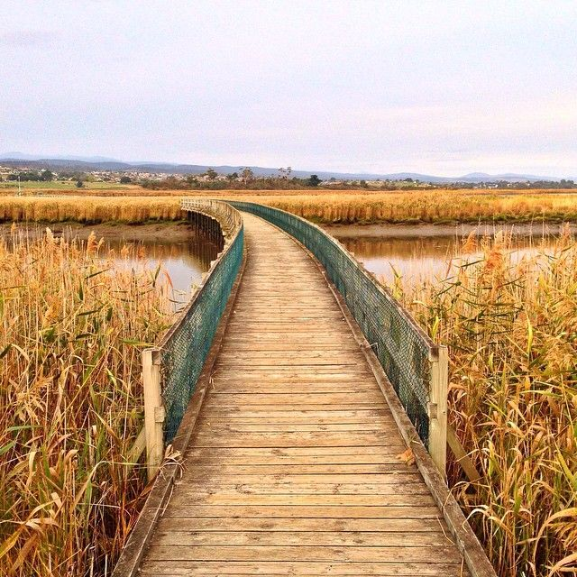 Taking a walk in the Tamar Wetlands via http://buff.ly/1NGMTPE?utm_content=buffer9244c&utm_medium=social&utm_source=pinterest.com&utm_campaign=buffer #northern #tasmania #travel