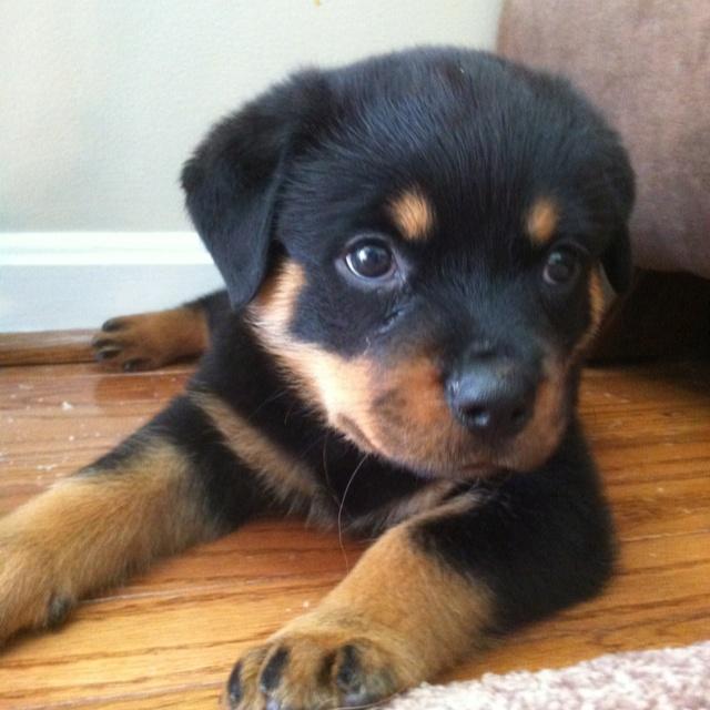 My little love.: Puppies