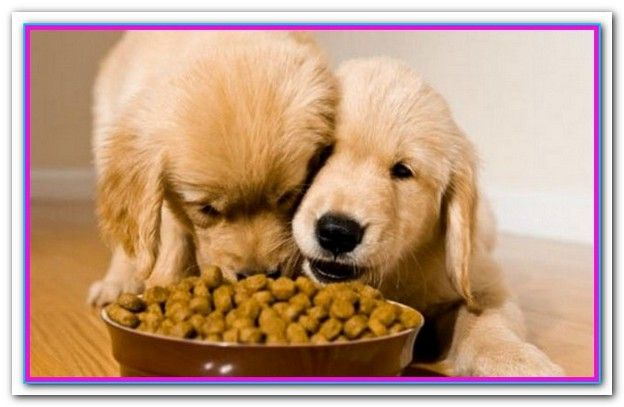 Best Inexpensive Dog Food 2018 With Images Dog Food Recipes
