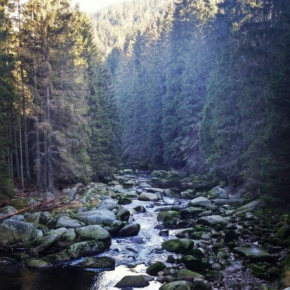 Řeka Vydra - The Vydra river