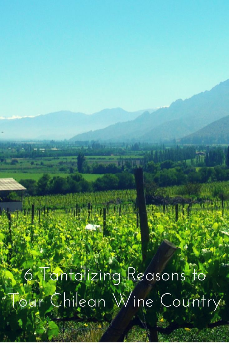 More reasons to visit South American Wine Country | 6 Tantalizing Reasons to Tour Chilean Wine Country