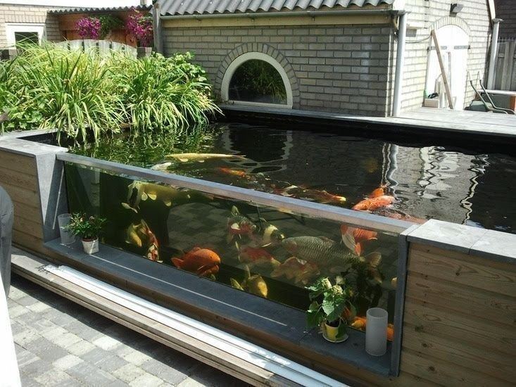 bassin exterieur bassin koi