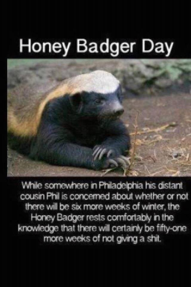 Honey Badger don't give a shit: Laughing, Funny Things, Funny Shit, Giggl, Funny Stuff, Honey Badger, Smile, Animal, Groundhog Day